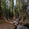 A beautiful trail around Tenaya Lake