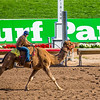 Turf Paradise Camel and Ostrich Races 23 March 2013 - 33-2