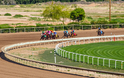 Turf Paradise Camel and Ostrich Races 23 March 2013 - 17
