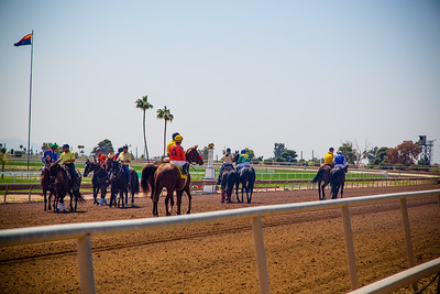 Turf Paradise Camel and Ostrich Races 23 March 2013 - 8