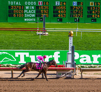 Turf Paradise Camel and Ostrich Races 23 March 2013 - 25-2