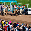 Turf Paradise Camel and Ostrich Races 23 March 2013 - 26-2