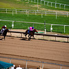 Turf Paradise Camel and Ostrich Races 23 March 2013 - 21-2