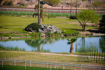 Turf Paradise Camel and Ostrich Races 23 March 2013 - 20-2