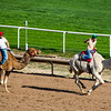 Turf Paradise Camel and Ostrich Races 23 March 2013 - 29-2