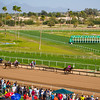 Turf Paradise Camel and Ostrich Races 23 March 2013 - 24-2
