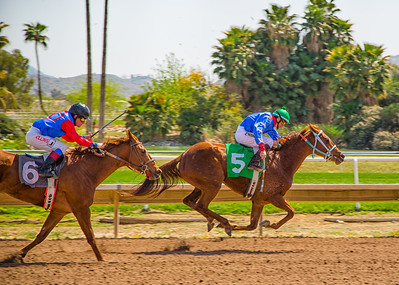 Turf Paradise Camel and Ostrich Races 23 March 2013 - 11