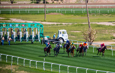 Turf Paradise Camel and Ostrich Races 23 March 2013 - 13