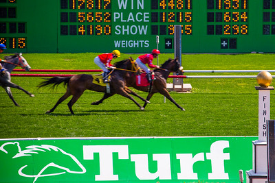 Turf Paradise Camel and Ostrich Races 23 March 2013 - 15-2