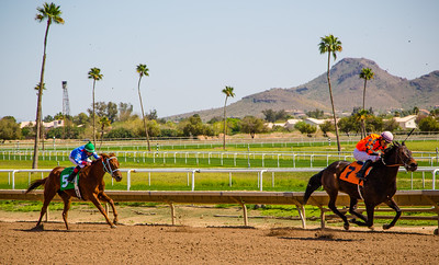 Turf Paradise Camel and Ostrich Races 23 March 2013 - 9