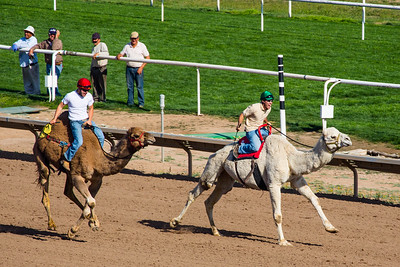 Turf Paradise Camel and Ostrich Races 23 March 2013 - 28-2