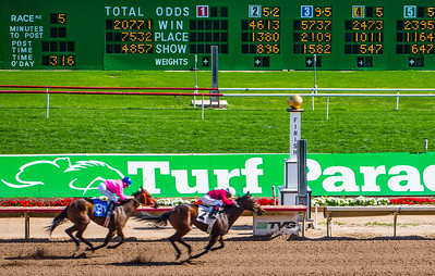 Turf Paradise Camel and Ostrich Races 23 March 2013 - 22