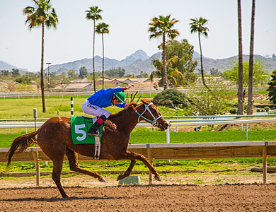 Turf Paradise Camel and Ostrich Races 23 March 2013 - 10