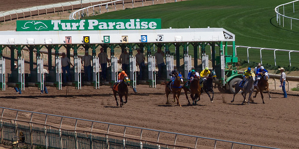Turf Paradise Camel and Ostrich Races March 2012 - 2