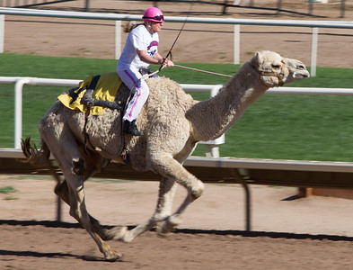Turf Paradise Camel and Ostrich Races March 2012 - 14