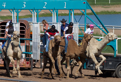 Turf Paradise Camel and Ostrich Races March 2012 - 13