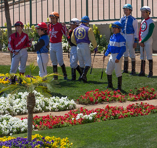 Turf Paradise Ostrich Camels and Horse Racing March 28 2015  009