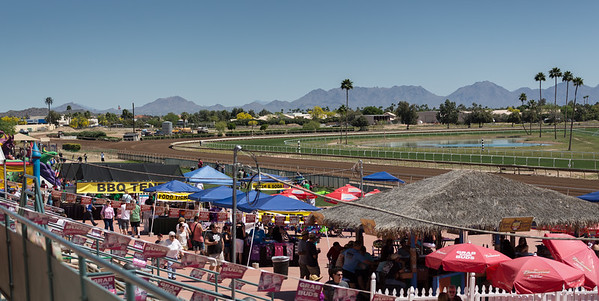 Turf Paradise Ostrich Camels and Horse Racing March 28 2015  008