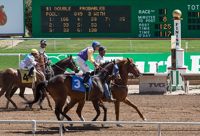 Turf Paradise Ostrich Camels and Horse Racing March 28 2015  013
