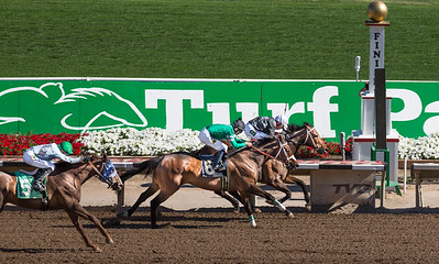 Turf Paradise Ostrich Camels and Horse Racing March 28 2015  026