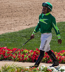 Turf Paradise Ostrich Camels and Horse Racing March 28 2015  010
