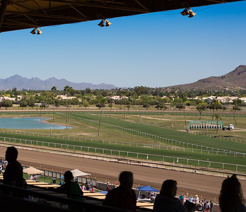 Turf Paradise Ostrich Camels and Horse Racing March 28 2015  018