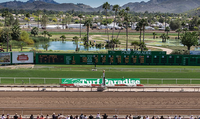 Turf Paradise Ostrich Camels and Horse Racing March 28 2015  017