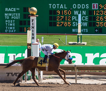 Turf Paradise Ostrich Camels and Horse Racing March 28 2015  016
