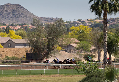 Turf Paradise Ostrich Camels and Horse Racing March 28 2015  012
