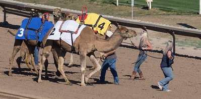 Turf Paradise Ostrich Camels and Horse Racing March 28 2015  027