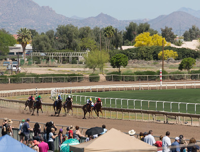 Turf Paradise Ostrich Camels and Horse Racing March 28 2015  014