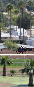 Turf Paradise Ostrich Camels and Horse Racing March 28 2015  019