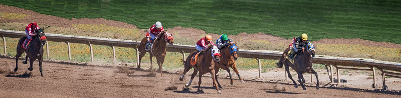 Turf Paradise Ostrich Camels and Horse Racing March 28 2015  022