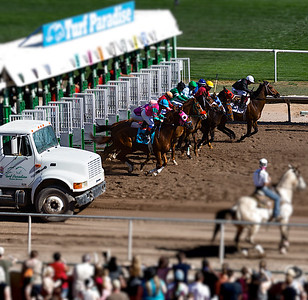 Turf Paradise Ostrich Camels and Horse Racing March 28 2015  020