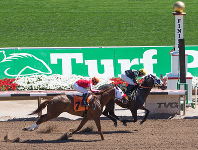 Turf Paradise Ostrich Camels and Horse Racing March 28 2015  023