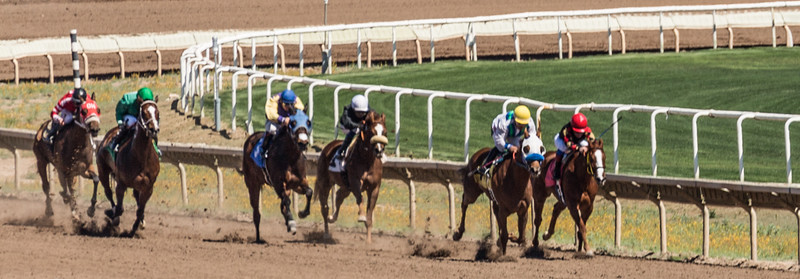 Turf Paradise Ostrich Camels and Horse Racing March 28 2015  015