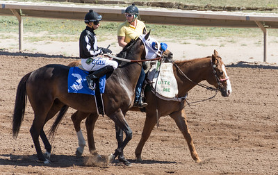 Turf Paradise Ostrich Camels and Horse Racing March 28 2015  025