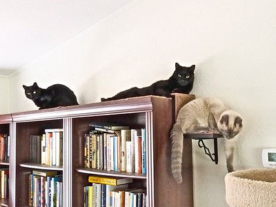 Just Cattin' Around (L to R:  Swiffer, Sofia, Turk)