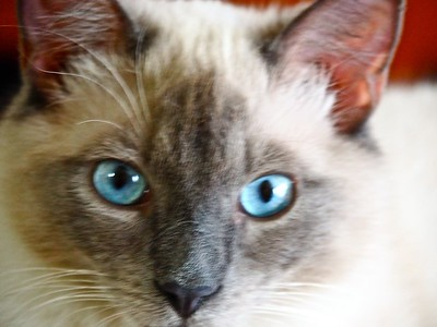 Love those blue eyes - even in a bad photo!
