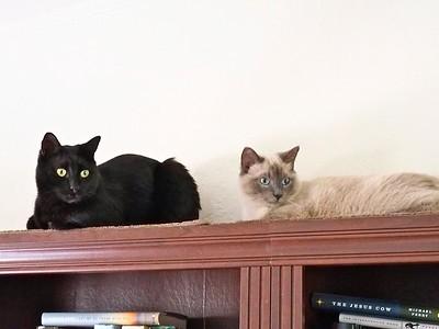 Swiffer & Turk