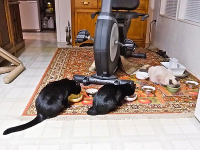 Dinnertime for Sofia, Swiffer and Turk.