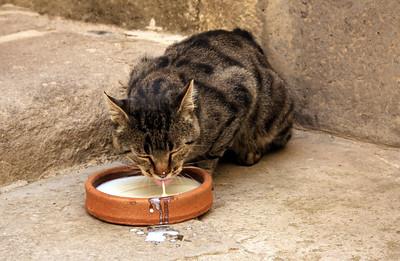 Lots of stray cats in Turkey... I think I fed 90% of them