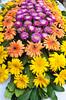 Closeup of flowers in a flower shop in Ankara, Turkey, Eurasia.