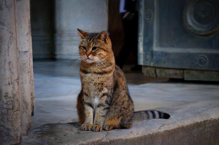 A cute cat inside Hagia Sofia, Istanbul