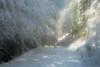 Winter wonderland, Sülüklü Göl, Bolu