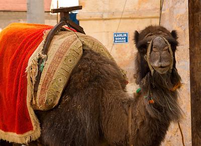 Cappadocia Camel
