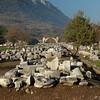Ephesus_2012 12_4495127