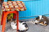 Two cats sleeping in the marketplace in Izmir, Turkey, Eurasia.