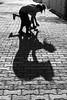 Playing shadows, Iznik