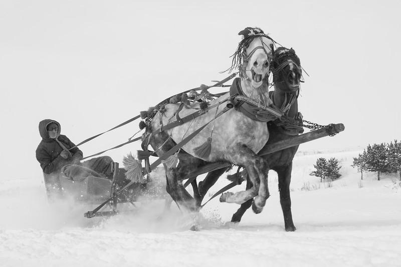The horses, Çıldır Lake, Turkey